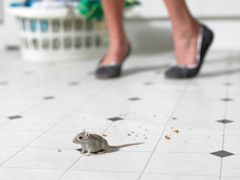 how to keep mice out of your yard