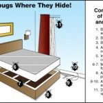 bed-bug-hiding