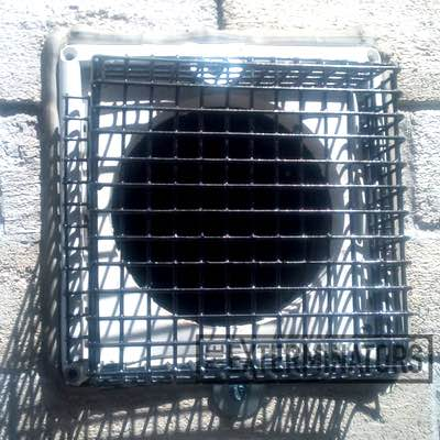 mouse-exclusion-and-extermination-Hamilton