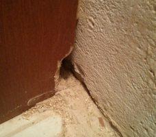 mice damage - mice exterminator Hamilton