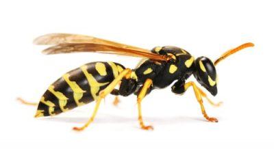 wasp control hamilton